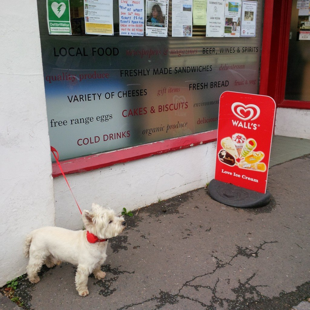 Bertie at the South Harting Stores