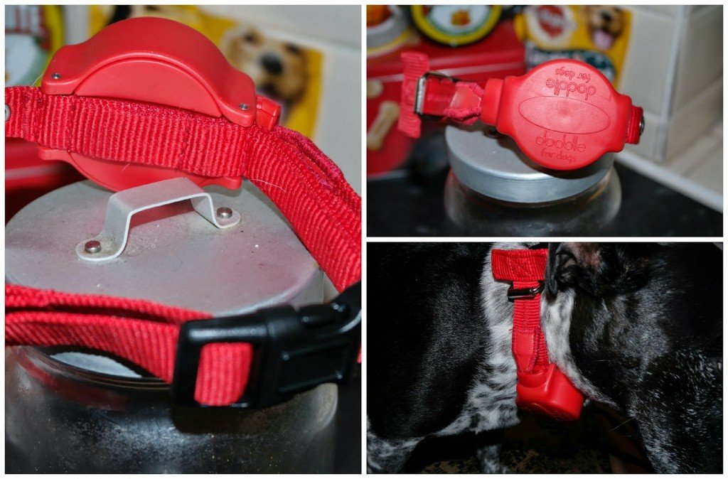 The Doddle attaches around the neck just like a standard dog collar