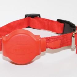 Doddle Collar