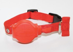 Doddle For Dogs dog collar by TK