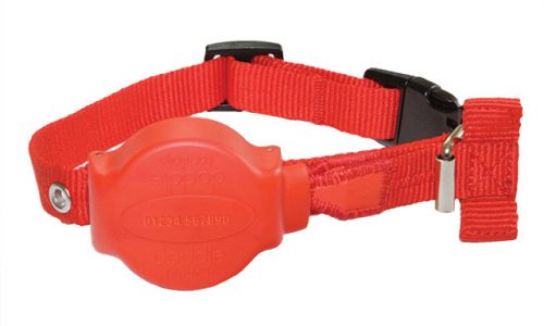 Doddle Dog Collar with all in one Lead