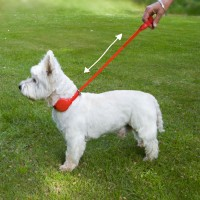 Doddle Dog Collar with Retractable extending Lead