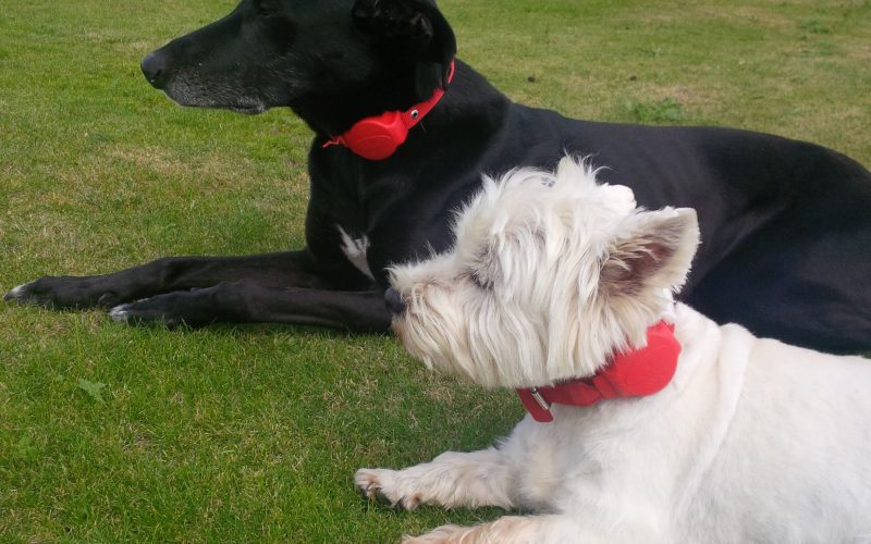 Revolutionary Dog Collar makes its debut at Pets Corner – just in time for Christmas!
