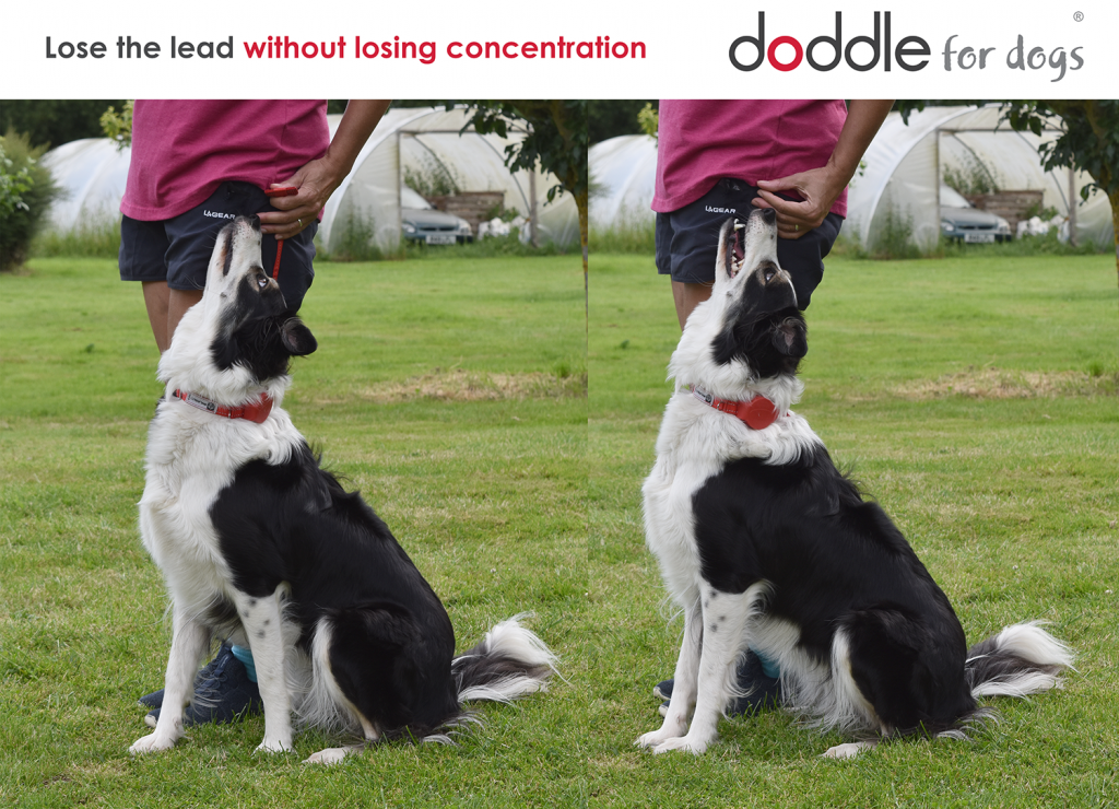 Dog obedience training aid