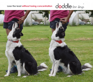 The Doddle – An Ideal Dog Obedience Training Aid