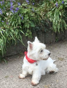 Read more about the article Train travel and how the Doddle helps to manage your dog.