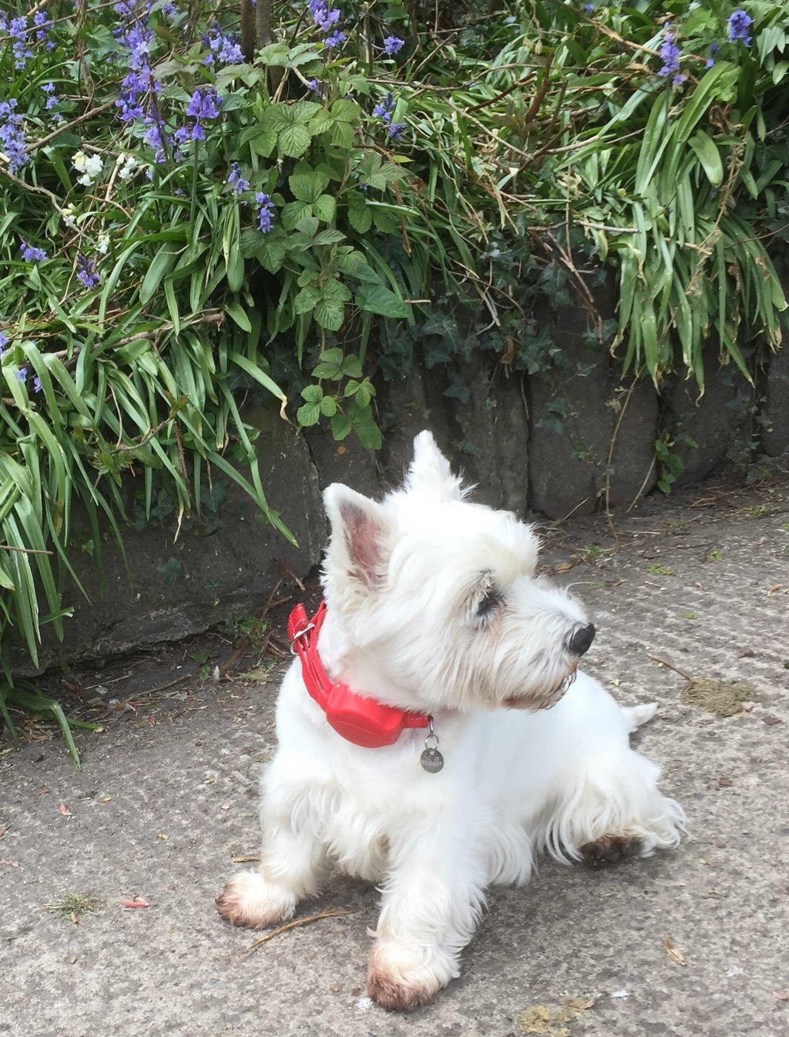 Train travel and how the Doddle helps to manage your dog.